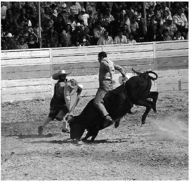 American Rodeo on the Borderline between Sport and